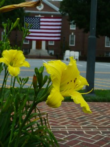 A yellow daylilly blooms by the Delaware state capitol building in Dover.